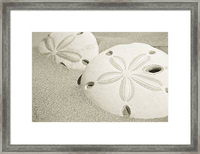 Two Sand Dollars Rest In The Sand Framed Print by Ralph Lee Hopkins