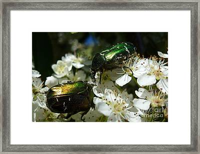 Framed Print featuring the photograph Two Scarabs Metallic Green by Jean Bernard Roussilhe