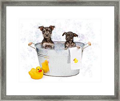 Two Scruffy Puppies In A Tub Framed Print by Susan Schmitz