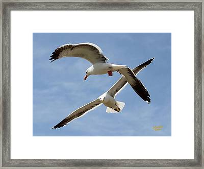 Two Seagulls Almost Collide  Framed Print