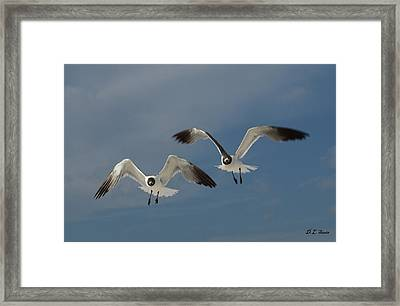 Two Seagulls Framed Print by Dennis Stein