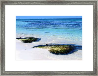 Two Seaweed Mounds On Punta Cana Resort Beach Framed Print