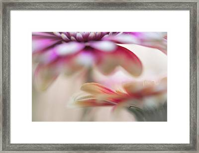 Framed Print featuring the photograph Two Souls 1. Macro Gerbera by Jenny Rainbow