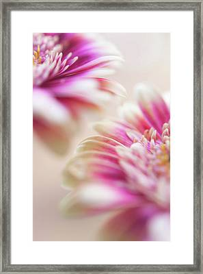 Framed Print featuring the photograph Two Souls. Macro Gerbera by Jenny Rainbow