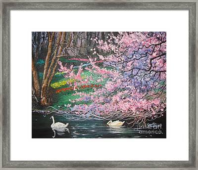 Two Swans Framed Print by Cynthia Sorensen