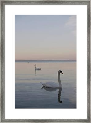Two Swans Framed Print by Stanislovas Kairys