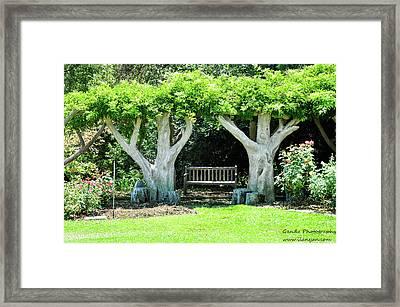 Two Tall Trees, Paradise, Romantic Spot Framed Print