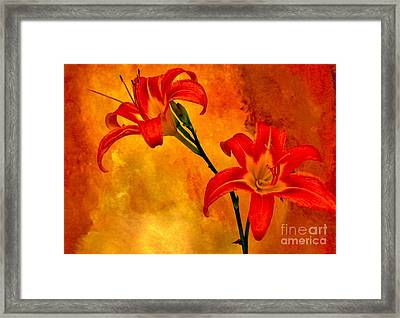 Two Tigerlilies Framed Print