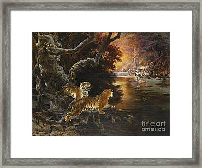 Two Tigers On The Hunt Framed Print by Celestial Images