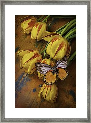 Two Tone Butterfly Framed Print by Garry Gay