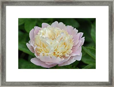 Two-toned Framed Print