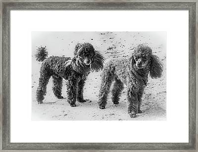 Two Toys B/w Framed Print