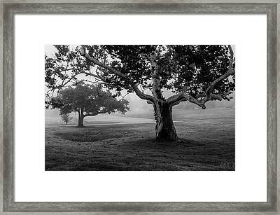 Two Trees Colt State Park Framed Print