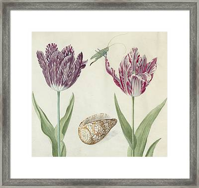 Two Tulips A Shell And A Grasshopper Framed Print by Jacob Marrel