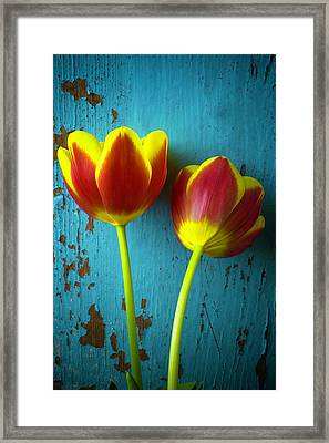 Two Tulips Against Blue Wall Framed Print by Garry Gay