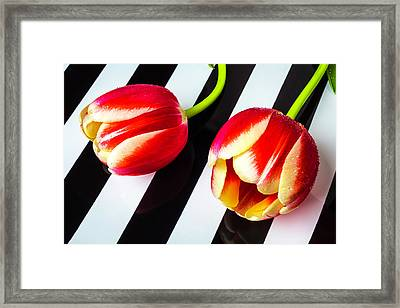 Two Tulips On Striped Plate Framed Print