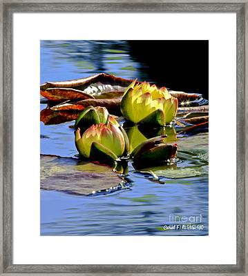 Two Water Lilies Framed Print by Carol F Austin