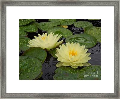 Two Water Lilies In The Rain Framed Print