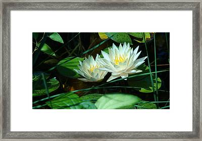 Two Waterlilies Framed Print