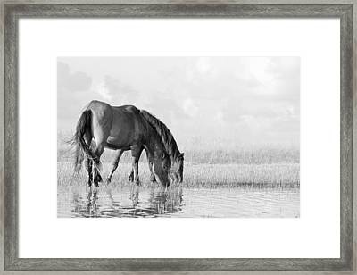 Framed Print featuring the photograph Two Wild Mustangs by Bob Decker