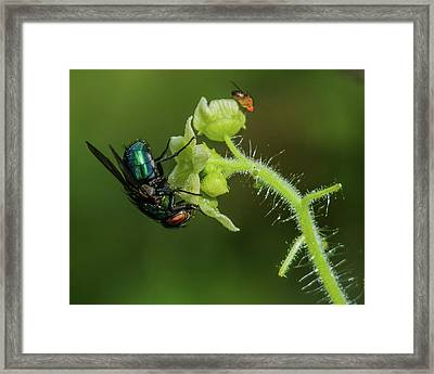 Two Winged Insects Sharing A Flowering Plant Framed Print by Mark Preston