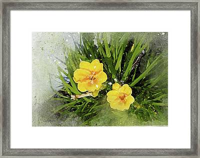 Two Yellow Beauties-2 Framed Print