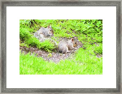Two Young Gray Squirrels Feeding. Framed Print by Rusty Smith