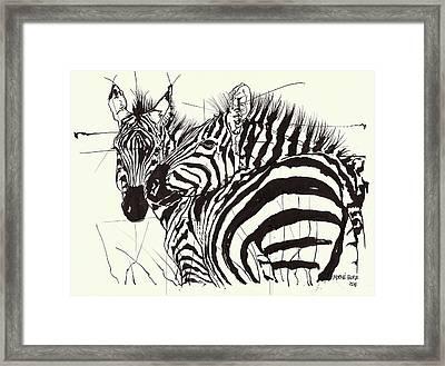 Two Zebra Black Ink Drawing 1 Framed Print