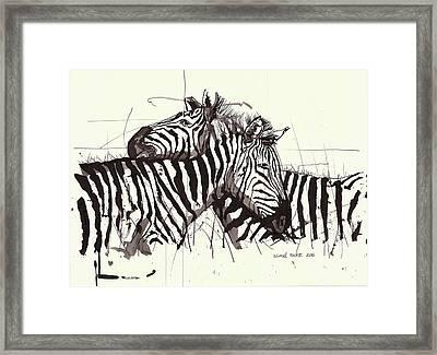 Two Zebra Black Ink Drawing 2 Framed Print