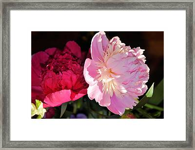 Two's Company Framed Print by Jan Amiss Photography