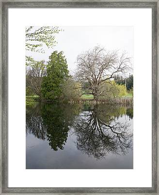 Two Trees Reflected Framed Print by Marilyn Wilson