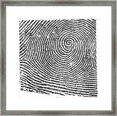 Typical Whorl Pattern In 1900 Framed Print