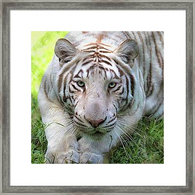 Framed Print featuring the photograph Tzatziki by Susan Rissi Tregoning