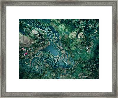Ubud Rice Terrace Framed Print