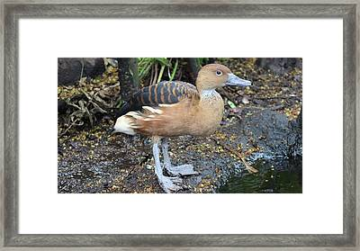 Ugly Duckling Framed Print by Tim Michael Ufferman
