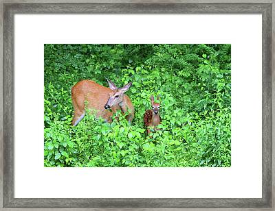 Uh Oh Spotted Framed Print
