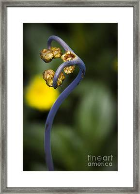 Uhule Tall Framed Print by Shawn Young