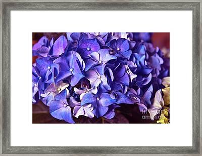 Ultra Violet Dance Framed Print