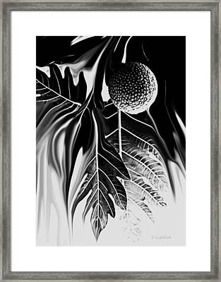 Ulu - Breadfruit Abstract Framed Print