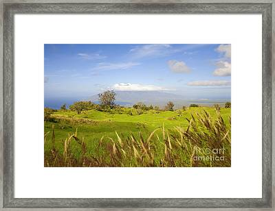 Ulupalakua Landscape Framed Print by Ron Dahlquist - Printscapes