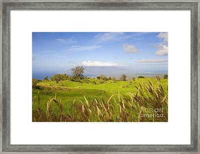 Ulupalakua Landscape Framed Print