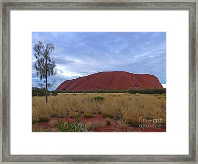 Uluru - Evening Light Framed Print by Phil Banks