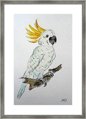 Umbrella Cockatoo Framed Print by Rita Drolet