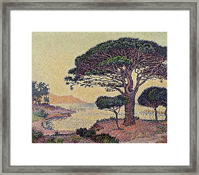 Umbrella Pines At Caroubiers Framed Print
