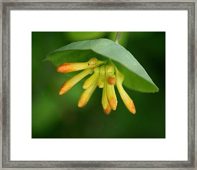 Framed Print featuring the photograph Umbrella Plant by Ben Upham III