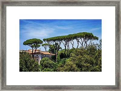 Umbrella Trees In Rome Framed Print
