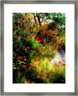 Umbrian Wild Flowers 3 Framed Print