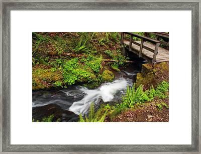 Umpqua Forest Beauty Framed Print