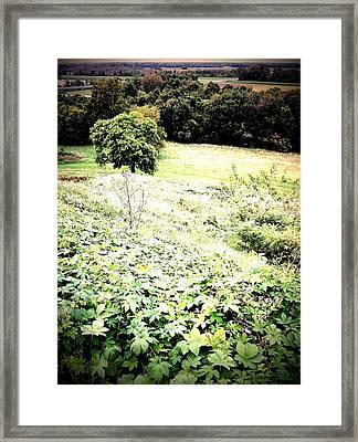 Unassuming Secrets Framed Print by John McGarity