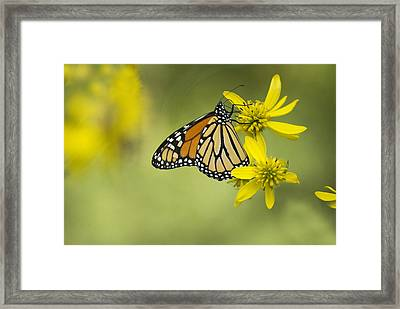 Framed Print featuring the photograph Unattached Purity by Elsa Marie Santoro